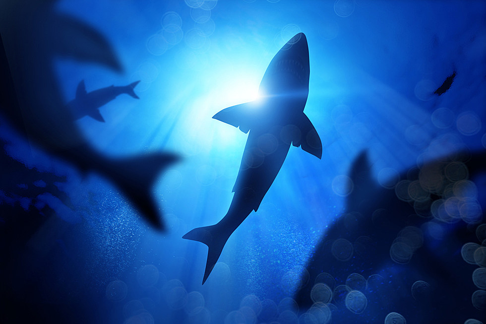 Get Ready for Shark Week With All Shark Everything!